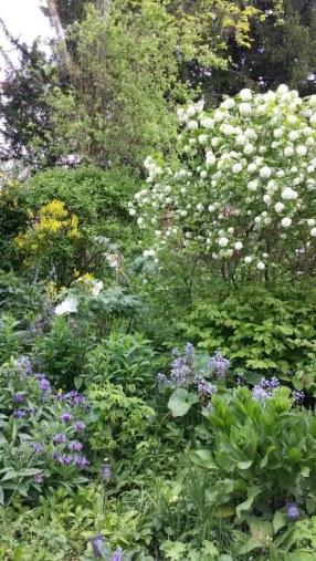 Chawton garden 1
